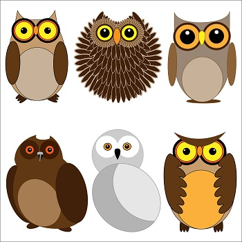 illustration of different types of owls